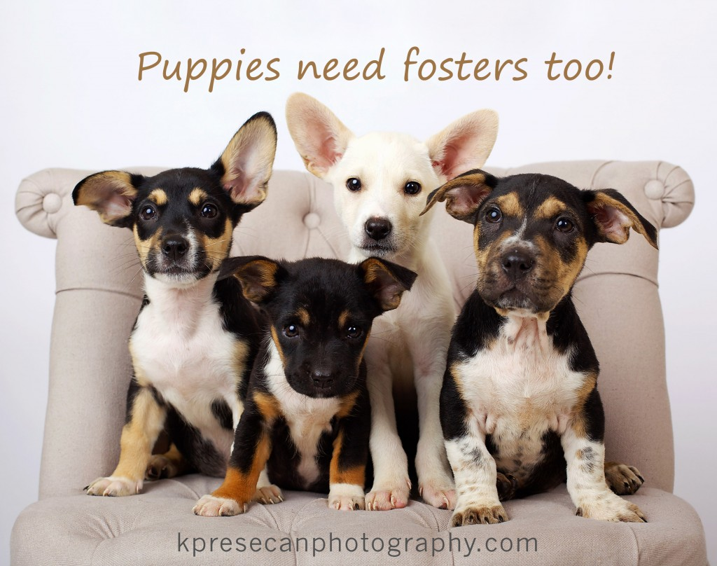 puppies need fosters too